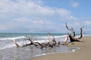 Sandstrand, Maremma