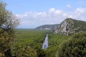 Pinienwald, Maremma