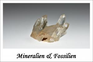 Mineralien & Fossilien