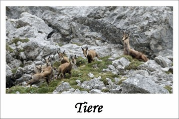 Tiere