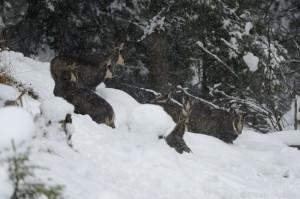 Gamsrudel, Winter, Schnee