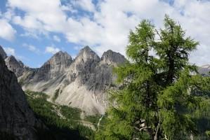Gamswiesenspitze mit Lärche