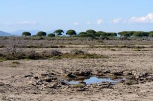 Sumpflandschaft, Maremma